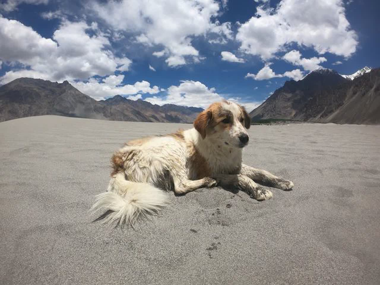 Á… Skin Cancer In Dogs Symptoms And Treatment