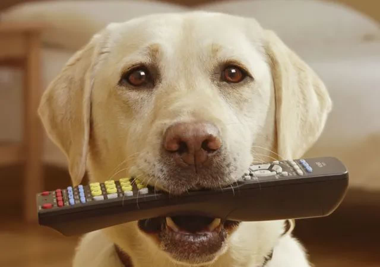 dog with remote