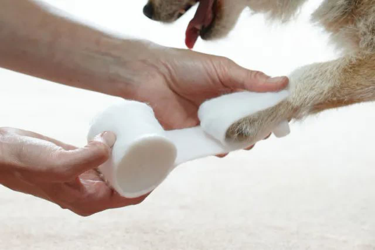 Owner applying sterile dressing to Jack Russell paw