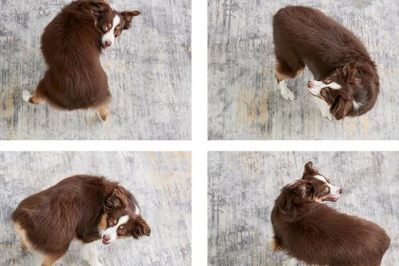 the progression of teaching a dog to spin