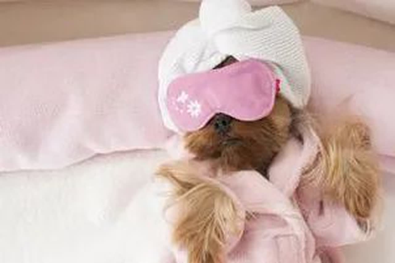 A dog wearing a robe, sleep mask and towel on its head.