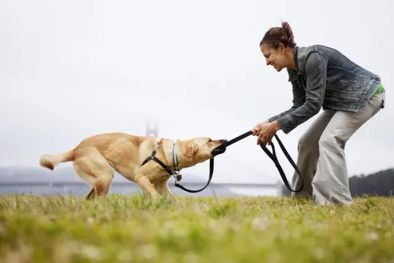 A dog and owner playing tug of war