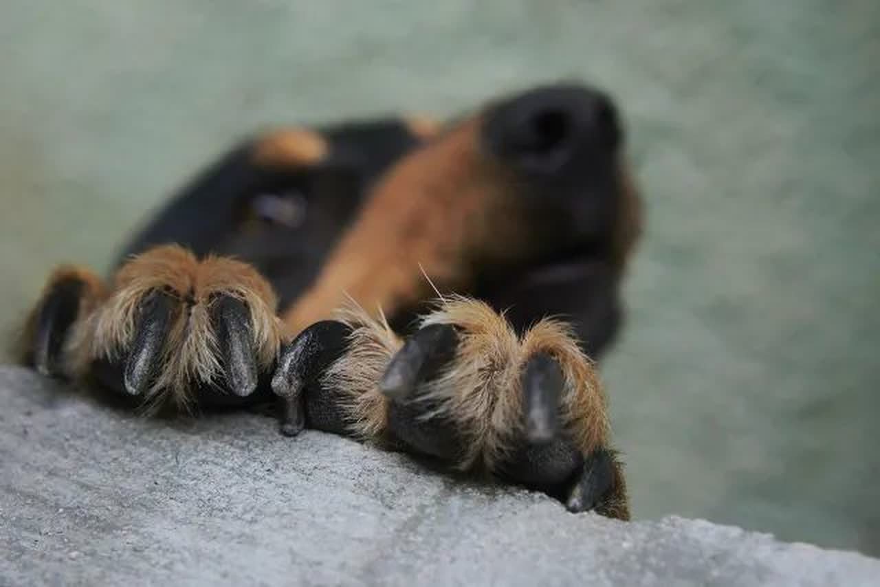 Dog paws on retaining wall