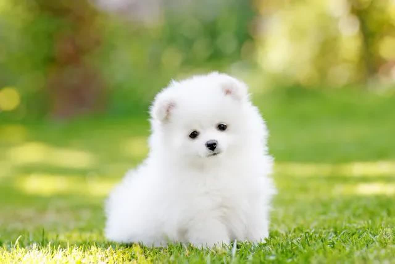 ᐅ Top 10 Cutest Teacup Dogs That Can Fit In Your Pocket