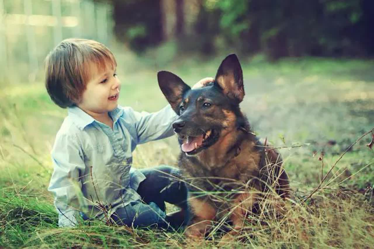 Toddler child with his dog