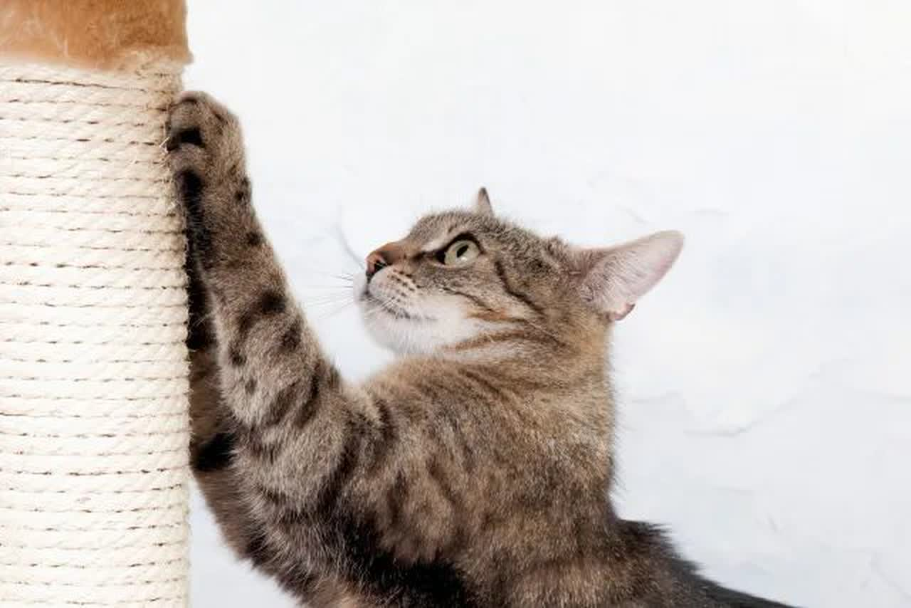 A Scratching Post or Two is Essential for Cats' Claws
