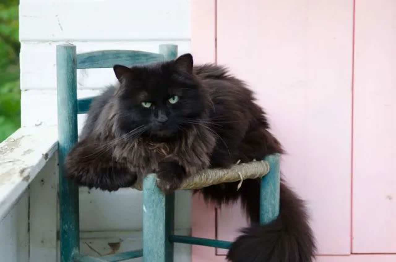 Black cat sitting on a chair