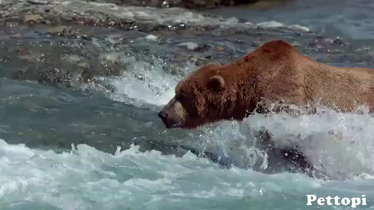 River of Bears