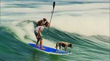 Dogs ride the waves at surfing
