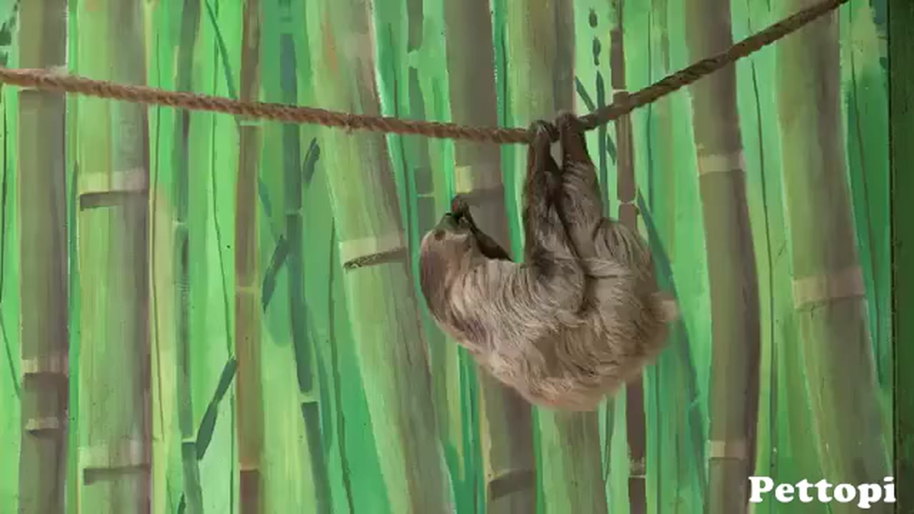 Monkey Steals Food from Sloth