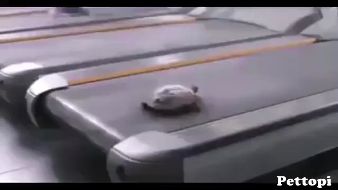 The whole world thinks turtles are slow animals