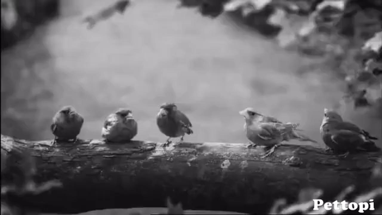 Best Beatboxing Bird In The World