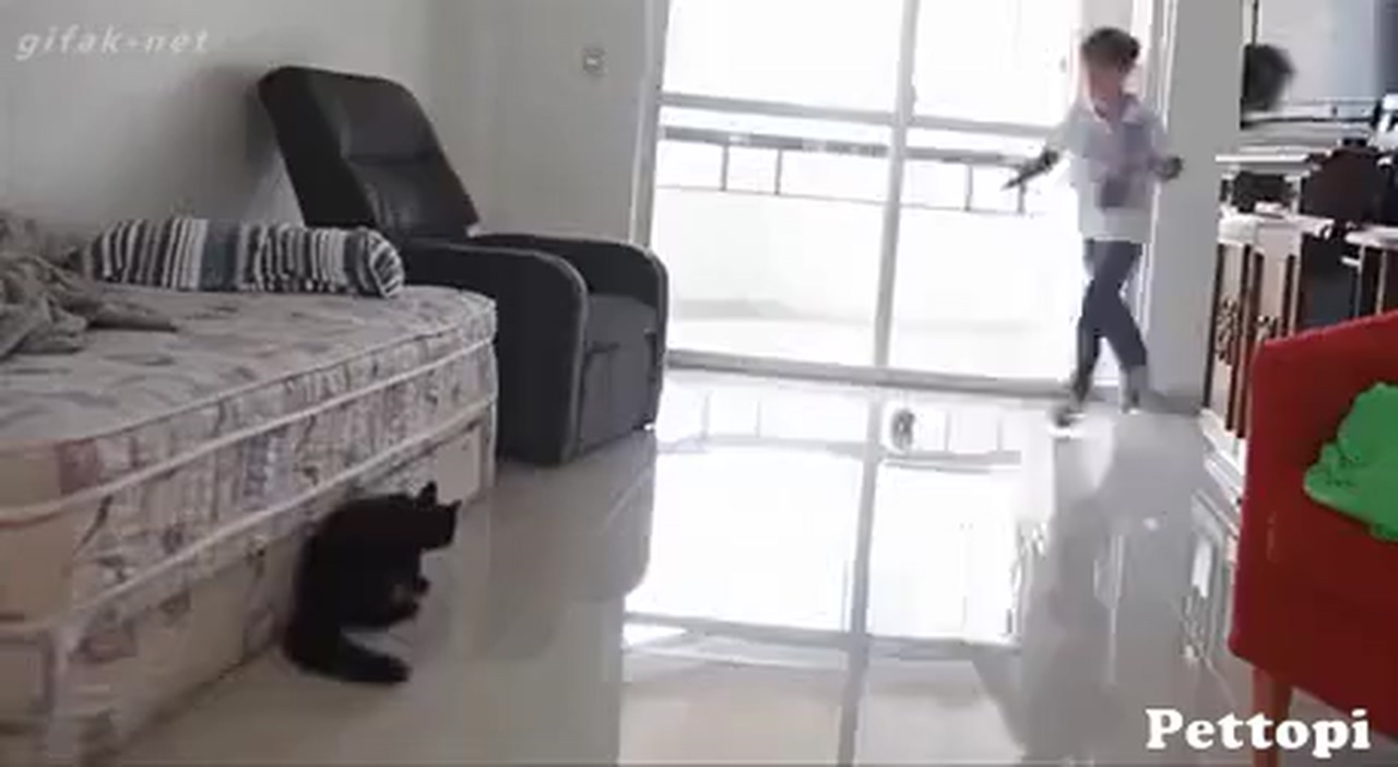 Best goalkeeper of all time - Funny Cat