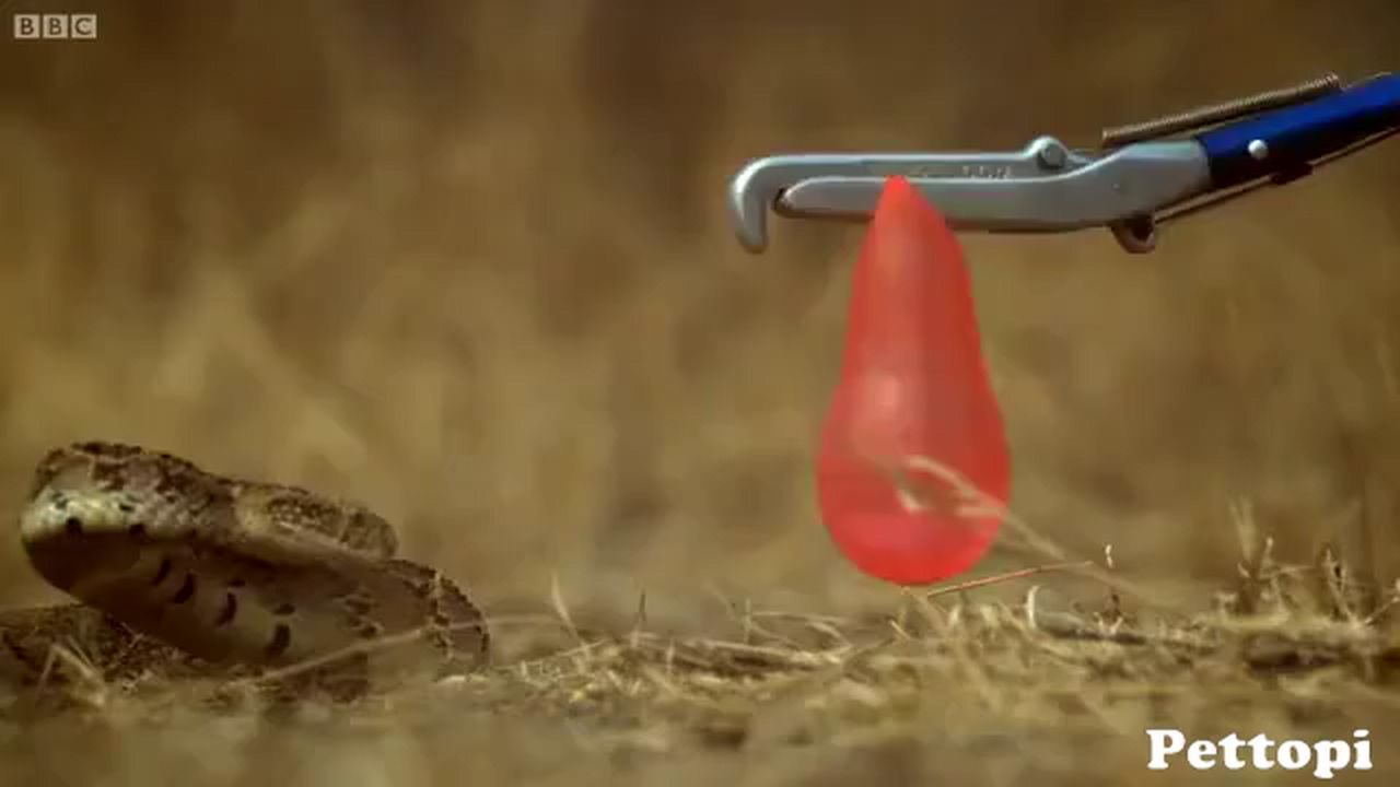 Always be careful with snakes