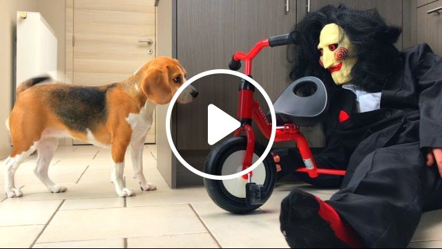 Beagle Hound Dog Breeds | Beagle Dogs, Beagle Dog Breed, Beagle Breeds