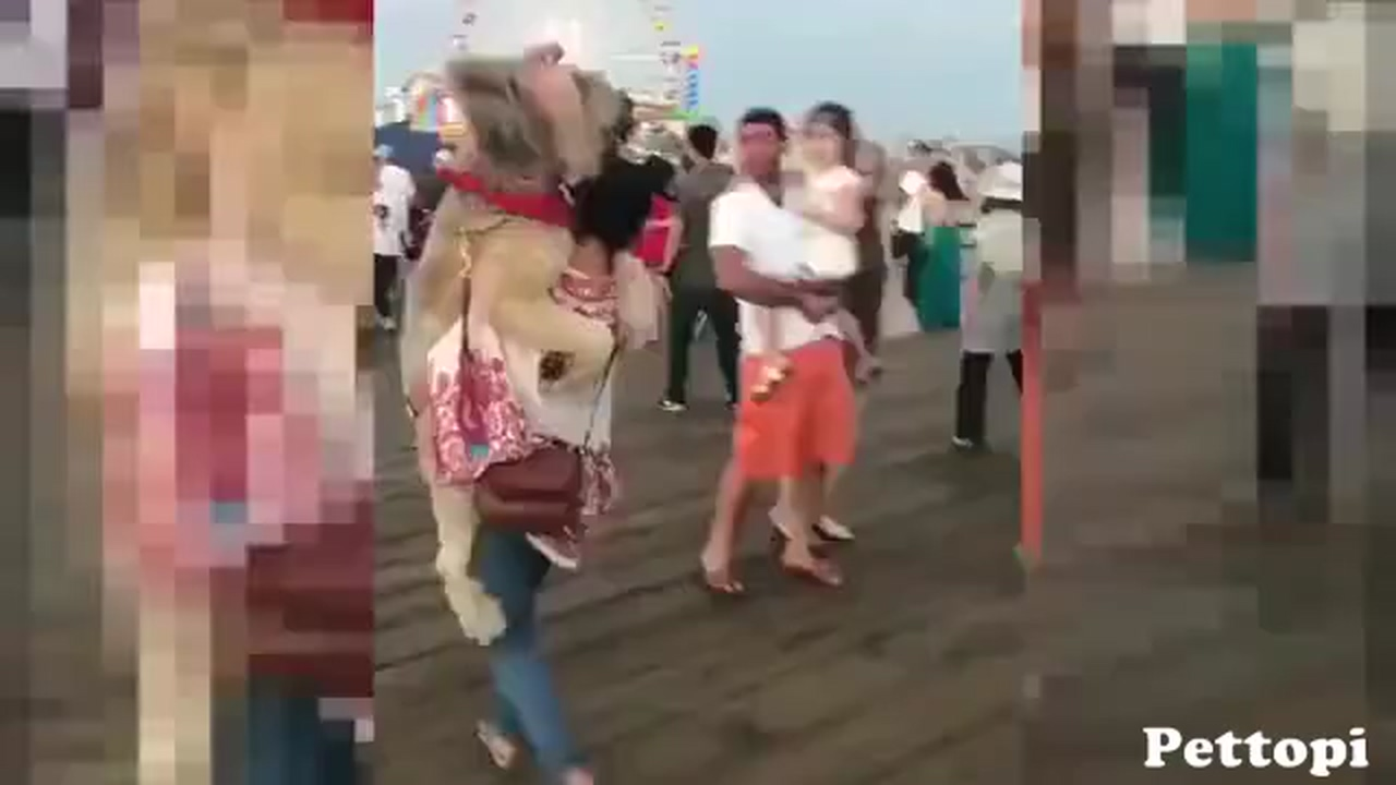 A Good Dog Owner!