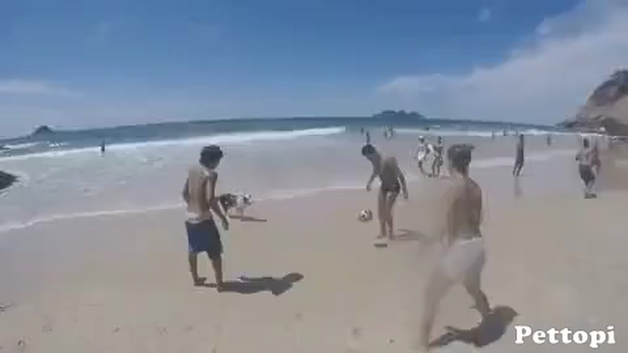 The dog can play football very well