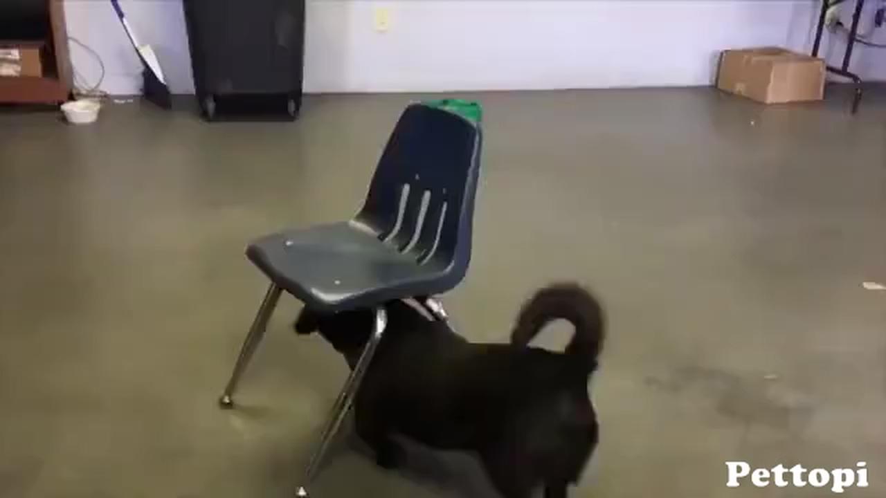Most intelligent dog