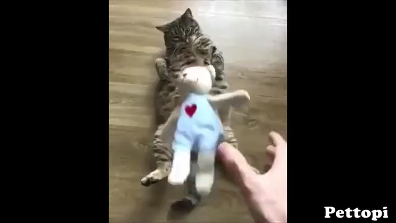 Favorite cat toy