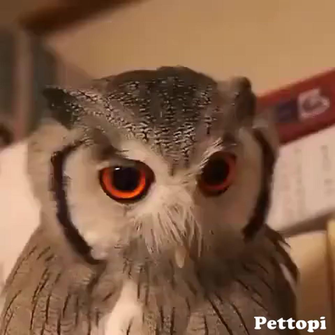 Transforming Owl