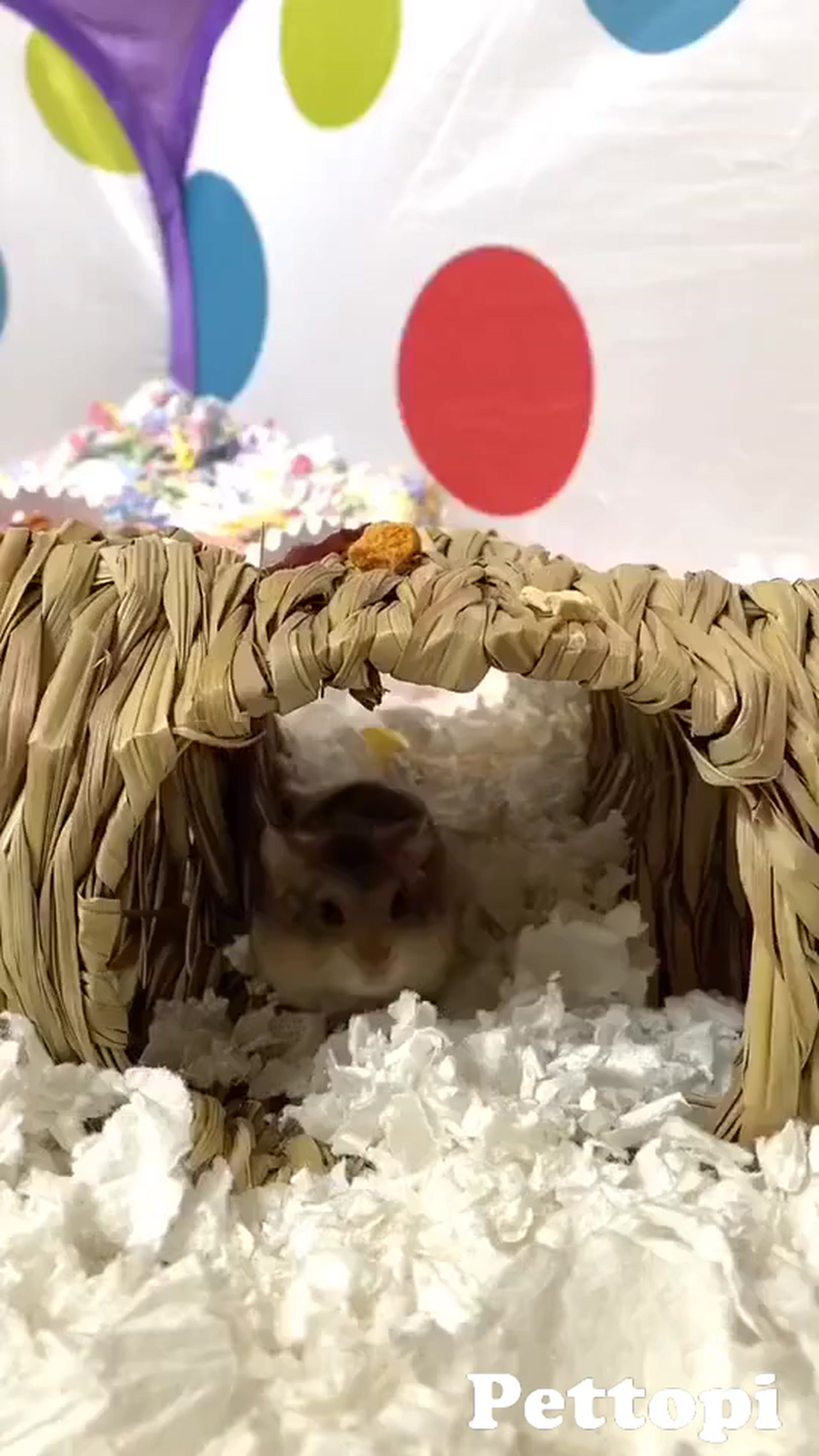 Make Homemade Play Tubes for Your Hamster