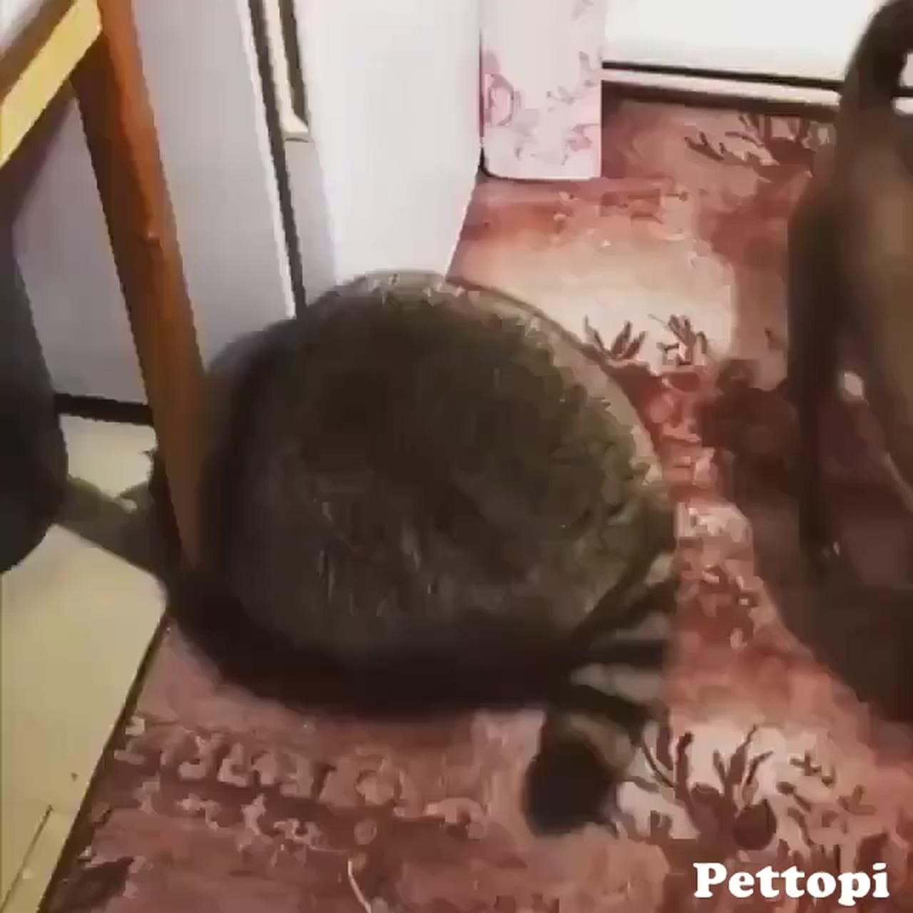 Mischievous Raccoon
